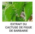 docteur renaud cactuse